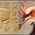 Este es uno de los mayores secretos guardados de la humanidad: la glándula pineal