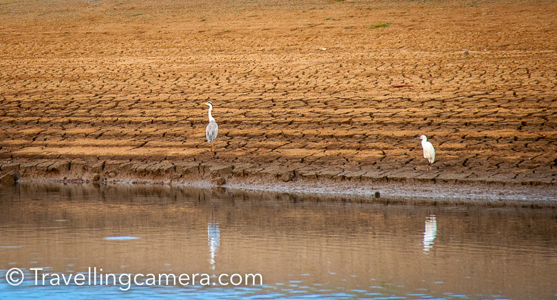 We saw few pelicans, bitterns, herons, egrets, storks, ducks, geese, hawks, kites, eagles, pheasants, cranes, cormorants, pigeons, woodpeckers, hornbills babblers & sparrows.