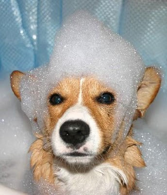 Funny Dogs Without Words Funny Dog Pictures With