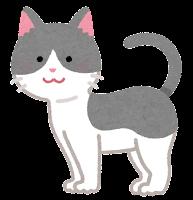 猫の模様のイラスト(グレー白)