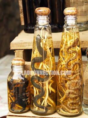 Market Upclose - Snake and scorpion in a bottle