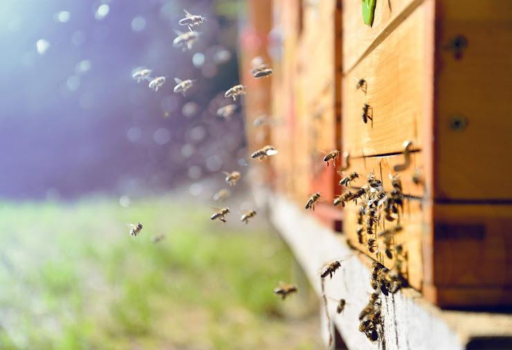 Claves para emprender que aprendí de las abejas