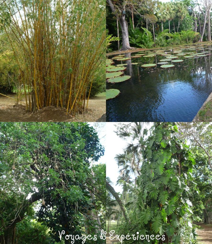 Voyages et exp riences maurice jardin de pamplemousses for Jardin pamplemousse