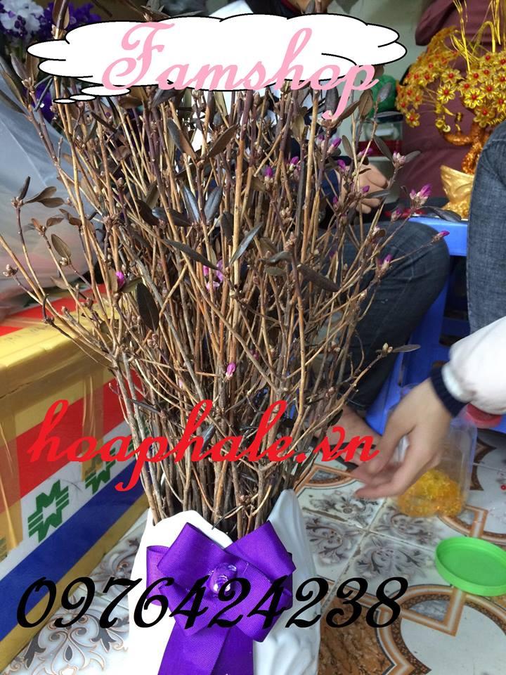 Hoa do quyen ngu dong tai Thach That