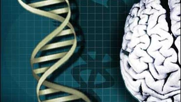 genes determine intelligence Dean ornish shares new research that shows how adopting healthy lifestyle  habits can affect a person at a genetic level for instance, he says,.