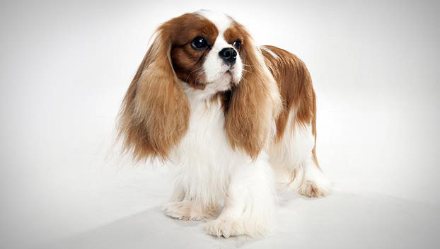 Which Small Dog Breed Is Right For Me - Luv My Dogs-4247