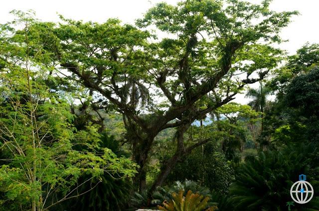 flora kuba