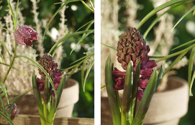 Vibeæg og lilla hyacinter