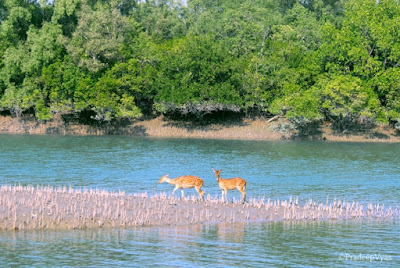 River-of-Sundarban