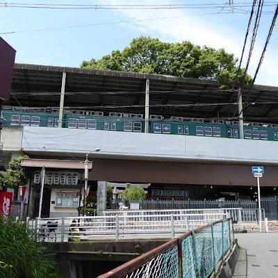 京阪本線『萱島駅』を貫く萱島神社の御神木・推定樹齢700年の大クスノキ