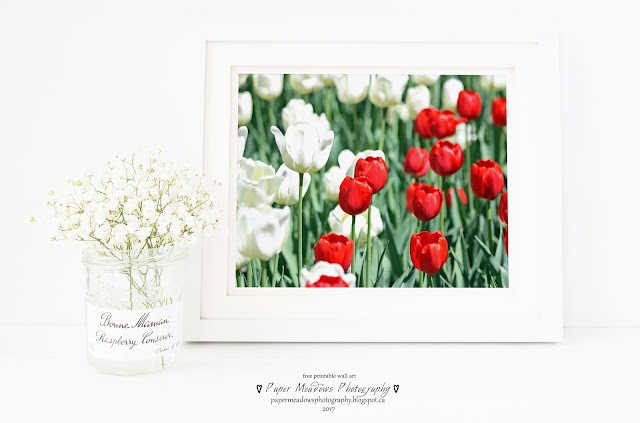 Paper Meadows Photography Blog-Free Printable Wall Art Set-Red and White Tulip Garden