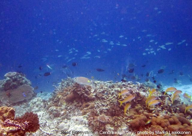 Foto snorkeling di Papua