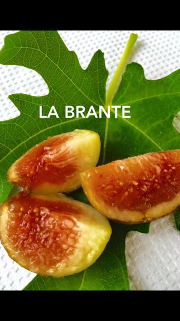 LA BRANTE Figs