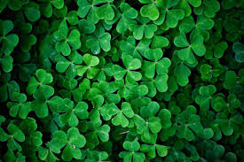 Happy St Patrick day wallpaper shamrocks