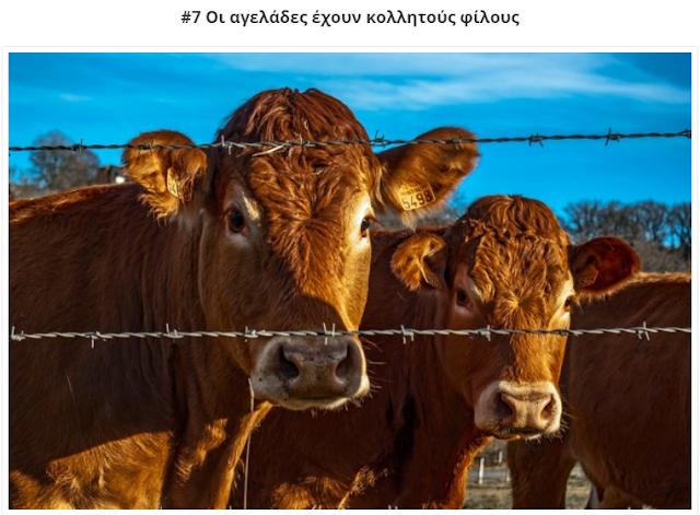 12 συναρπαστικές συνήθειες των ζώων που δε θα πιστεύετε ότι είναι αληθινές