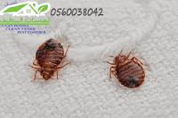 شركة مكافحة حشرات بجدة , رش مبيدات فى جدة