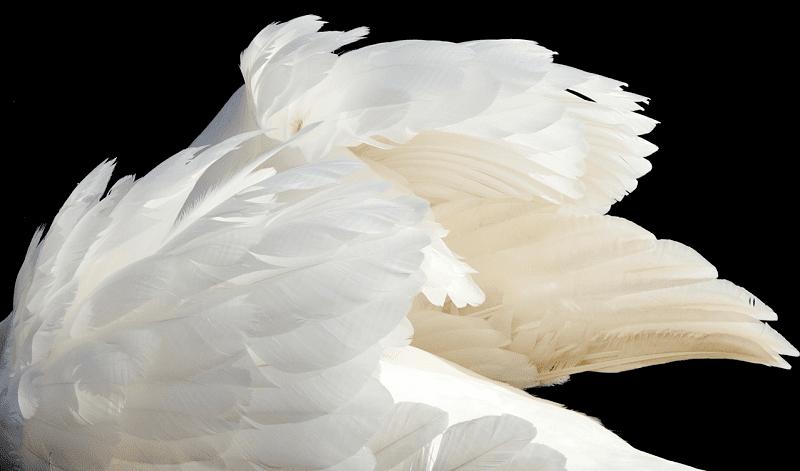 skrzydła