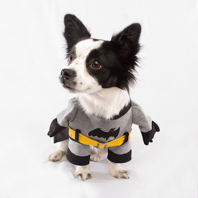 Halloween-dog-Batman-costume