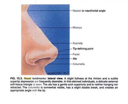 Nose Revision Surgery And Surgeons Aesthetic Nomenclature Of The Nose