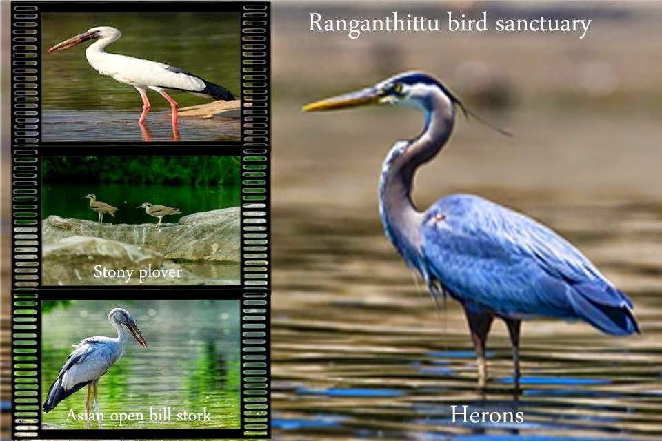 Ranganathittu Bird Sanctuary, Karnataka
