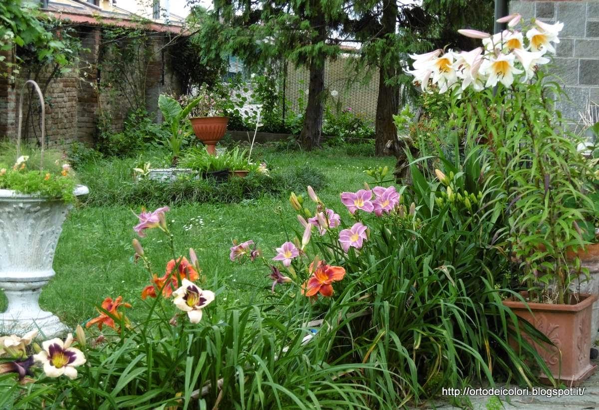 L 39 orto dei colori lilium for Lilium in vaso