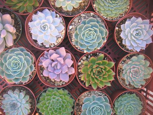 Add A Unique Touch To Your Home: Succulents Plants Sydney: Add A Unique Touch To Your