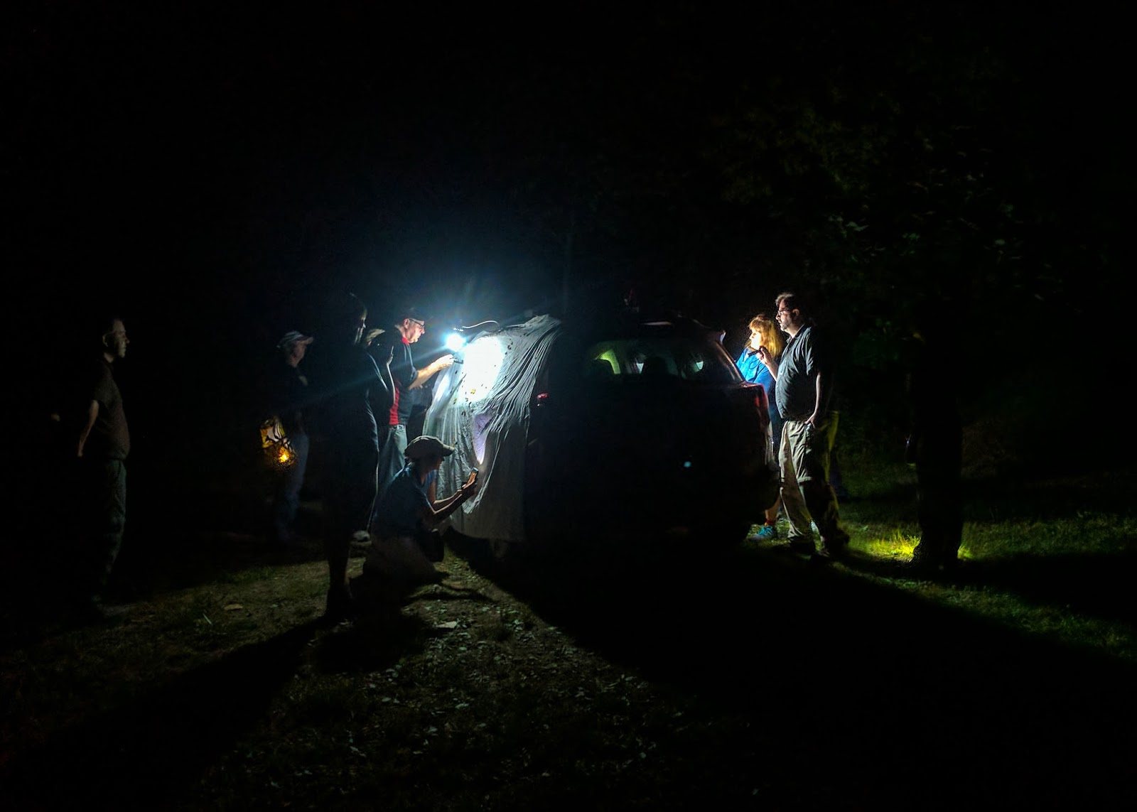 Mothing in Ohio