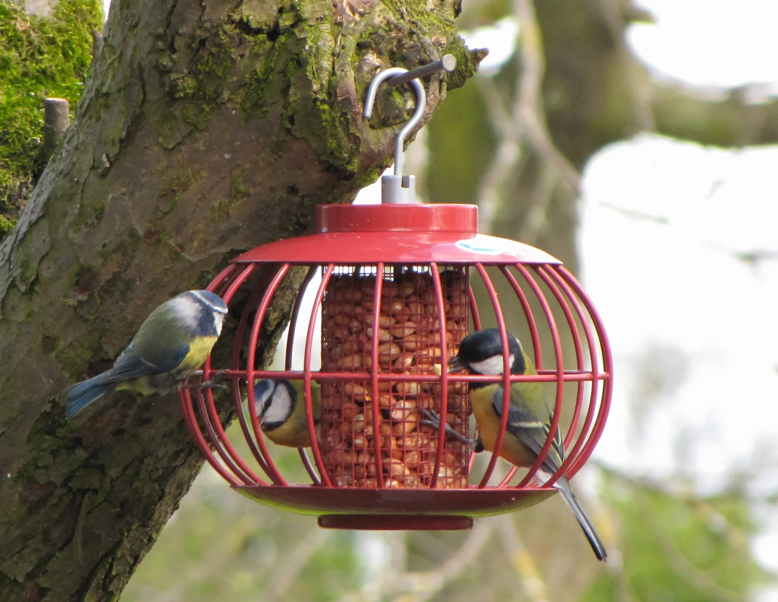 Squirrel Proof Feeders from Flyte so Fancy
