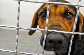 Καστοριά: Καταγγελία κακοποίησης ζώων