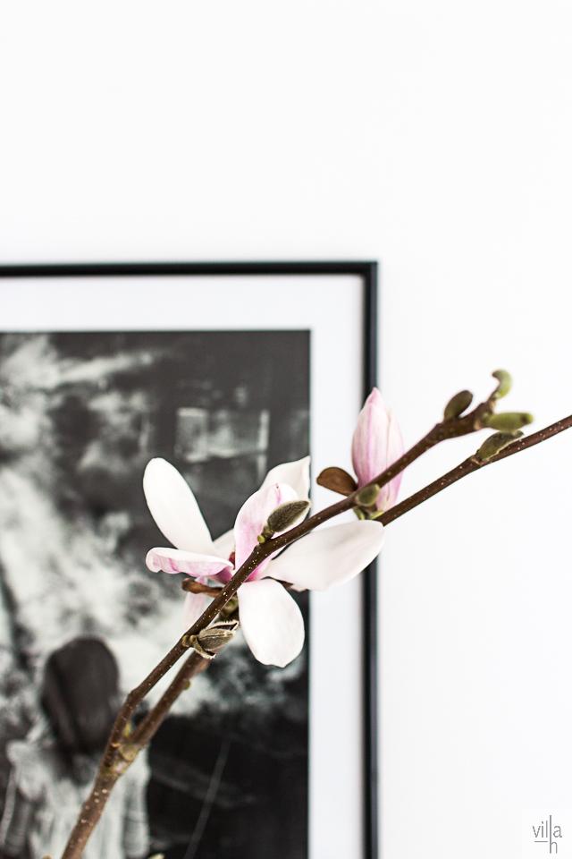 magnolia, interior, olohuone
