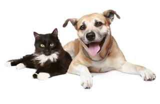 Pas i mačka Panvet veterinarska stanica Subotica