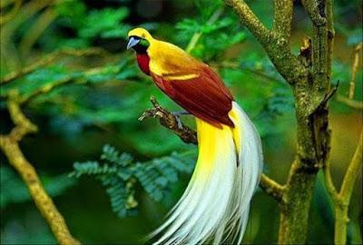 Soal IPA cuilan pelestarian binatang dan flora dan kunci tanggapan 30 Soal dan Jawaban Pelestarian Hewan dan Tumbuhan Lengkap