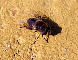 Insecto macro