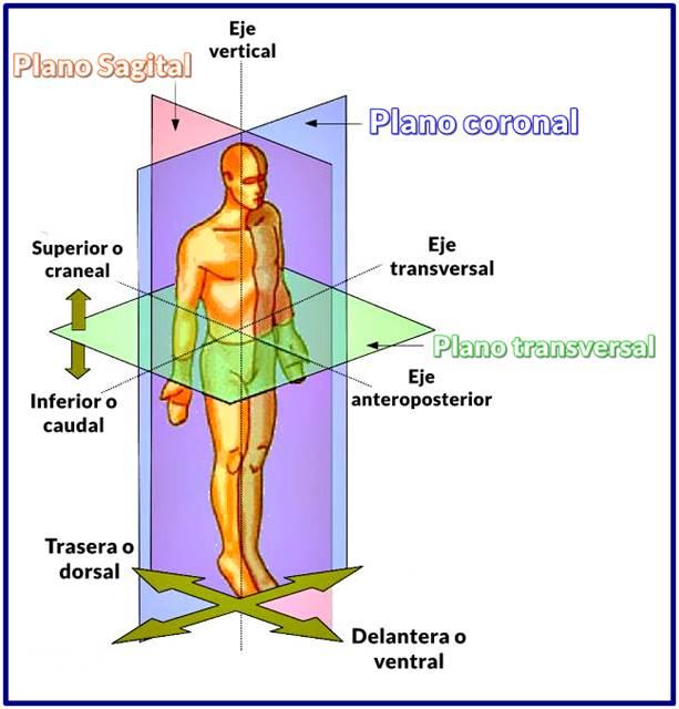 Planos anatómicos principales y sus ejes corporales