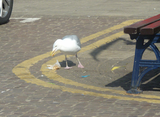 Great Yarmouth seagull