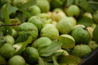mercato Guava in Bangladesh