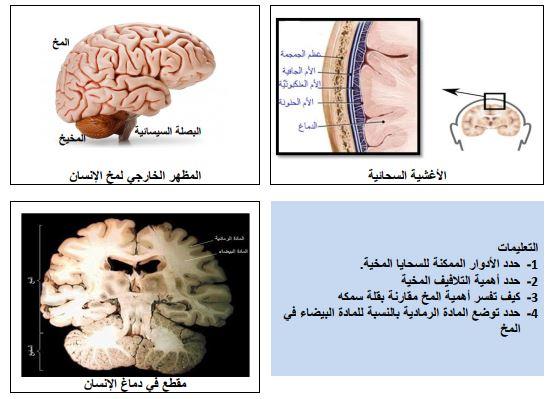مذكرات معالجة الرسالة العصبية للاستاذ خالد محمودي السنة الرابعة متوسط علوم طبيعية