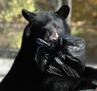 Tips for Morris County Residents to Reduce Encounters with Black Bears