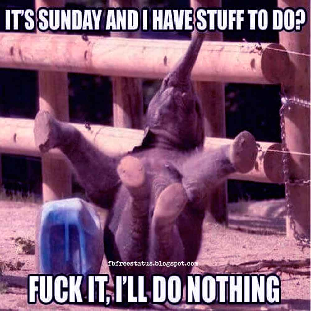 Good Morning, It's Sunday and i Have Stuff to do? Fuck It, I Will Do Nothing.