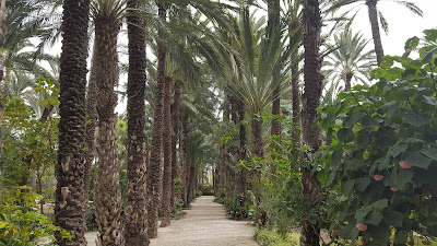 palm trees at Elche Gardens - The Huerto del Cura