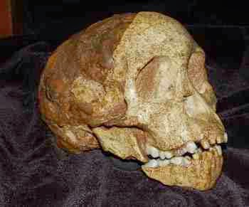 http://sciencythoughts.blogspot.co.uk/2012/05/skull-closure-in-taung-infant.html