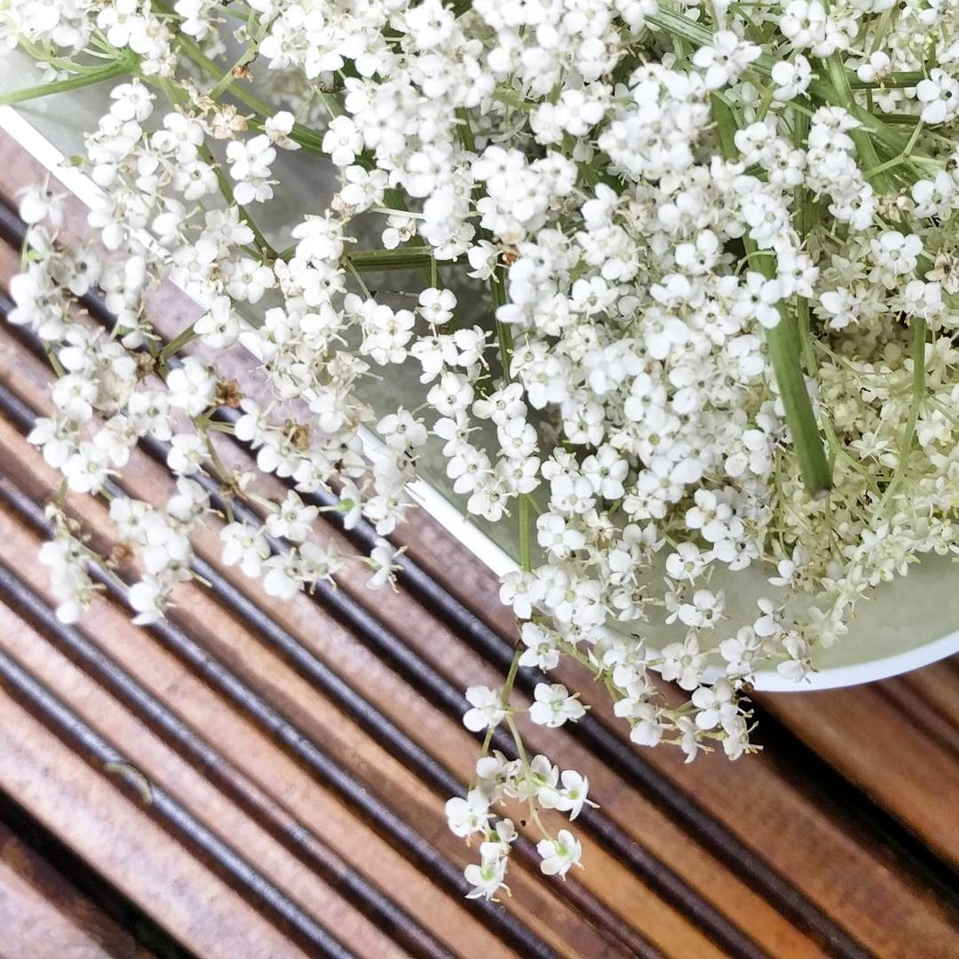 a bowl of elderflowers
