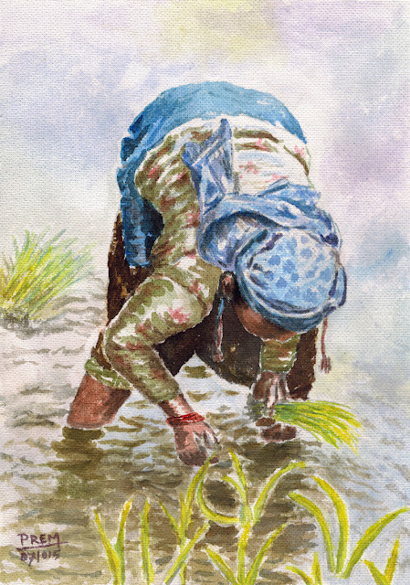 Watercolor Painting of a Women Planting Paddy