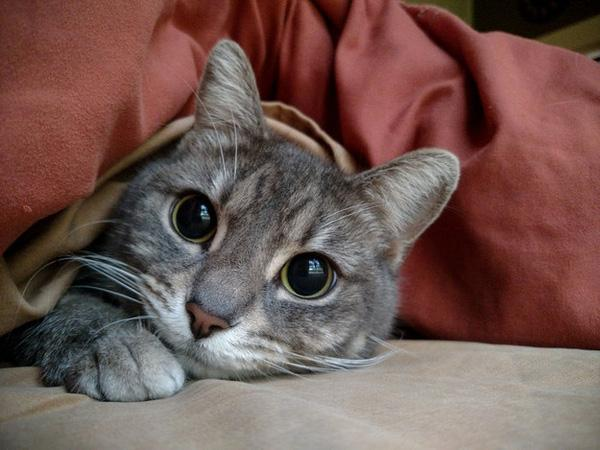 """17 lời tâm sự yêu thương dành cho """"tri kỷ"""" theo phong cách mèo"""
