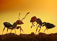 Kahve Falında Karınca Görmek