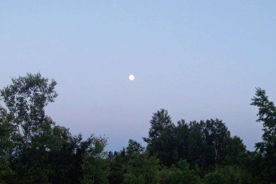 moon over pea pickle farm