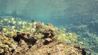http://www.tropicallight.com/swim1/02dec18LP/02dec18LP.html