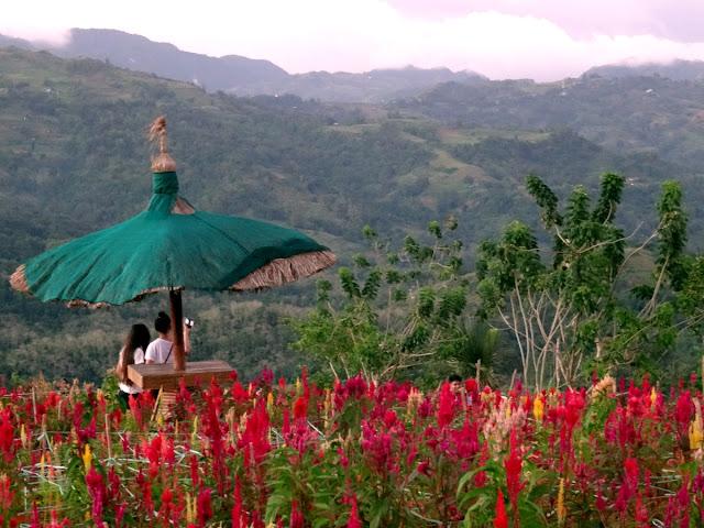 Celosia Sirao Peak Cebu
