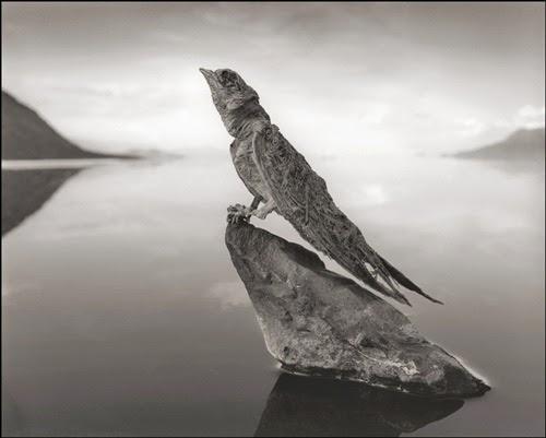 ave-múmia-lago-natron
