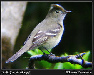 pampa´s birds